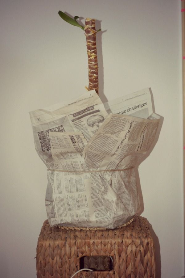 yucca pot wrapped in newspaper