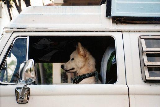 Natural Dog Car Sickness Remedies