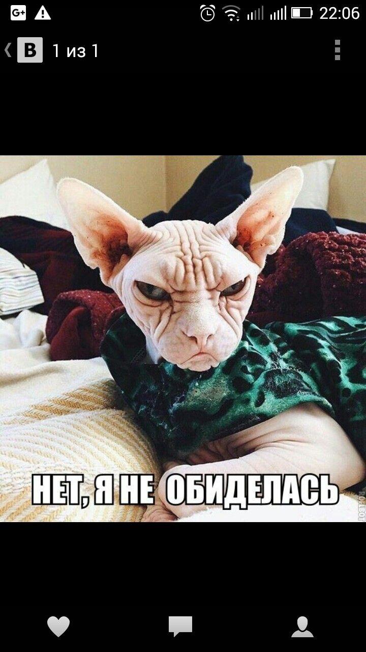 Пин от пользователя Ирина Андриенко на доске коты Кот