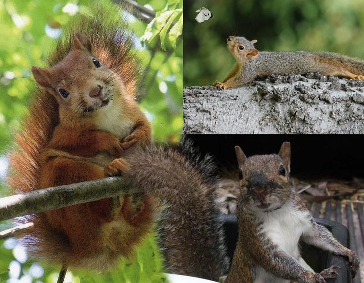 1000 Images About Squirrel Love On Pinterest Squirrel