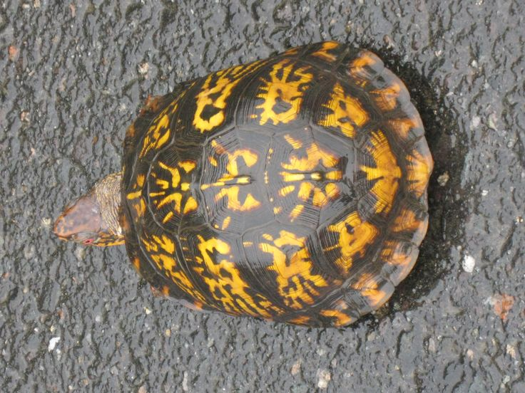 17 Best images about Tortoise on Pinterest | Bbc news ...