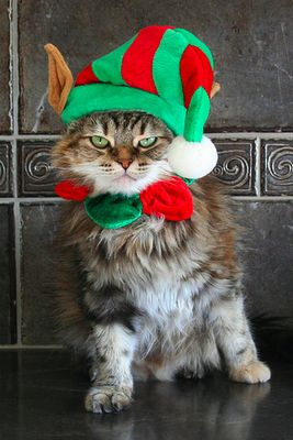Elf Kitty.  Yus Humans think dis is funny.....have yus looked at yourself lately......