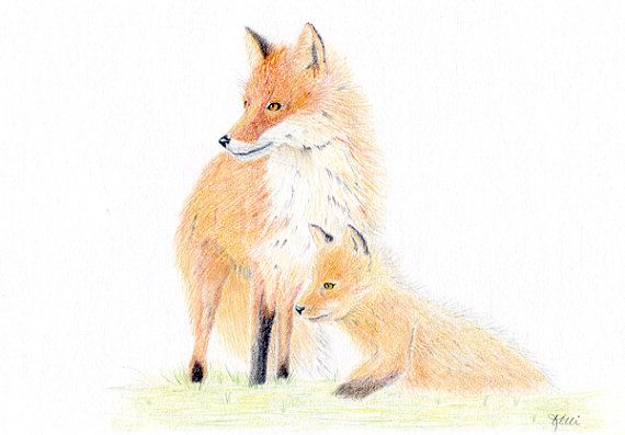Red Fox Mother and Pup  Original Colored by KelliMcNicholsArt