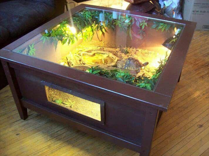 Turtle coffee table terrarium enclosure