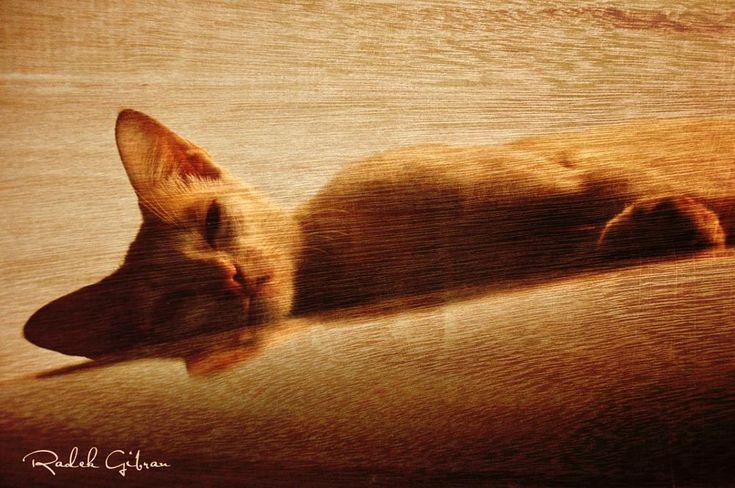 cat by Radek Gibran