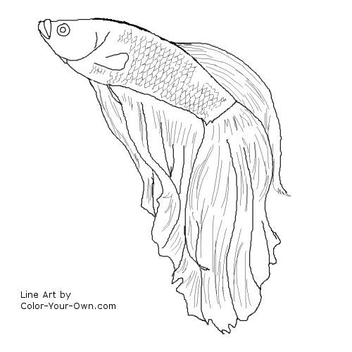 Betta fish i 39 m gonna try to draw this for my friend she for B liner fish