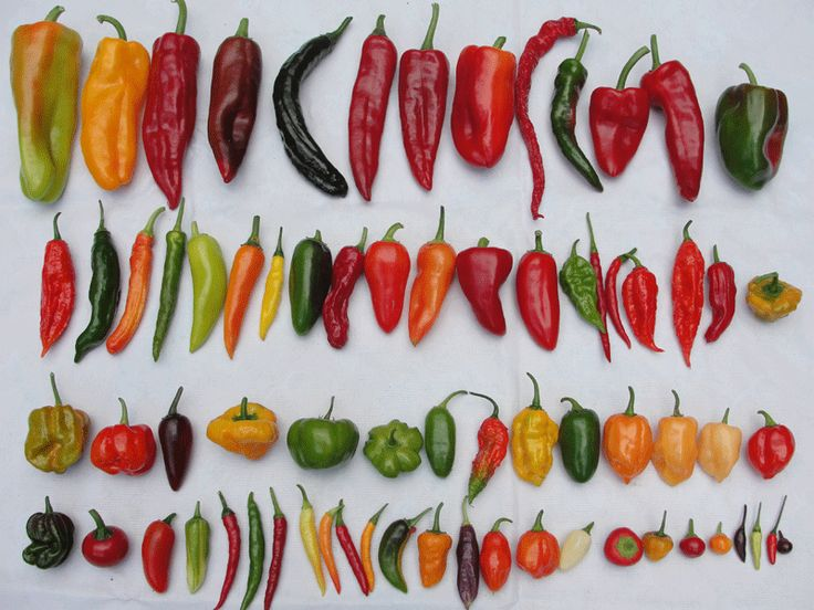 VARIETES PEPPERS | All the varieties of chili peppers
