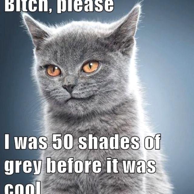 50 shades of gray!Funny Kitty, Grey Cat, Kitty Cat, Funny Pics, Funny Pictures, 50 Shades, Fifty Shades, 50Shades, Cat Lady