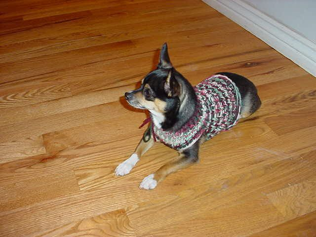 Off The Loom Knifty Knitter Chihuahua Or Small Dog