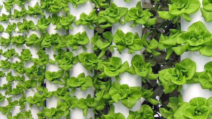 604 besten plantes vertes et fleurs bilder auf pinterest. Black Bedroom Furniture Sets. Home Design Ideas