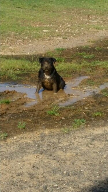 Spud trying to blend with the mud