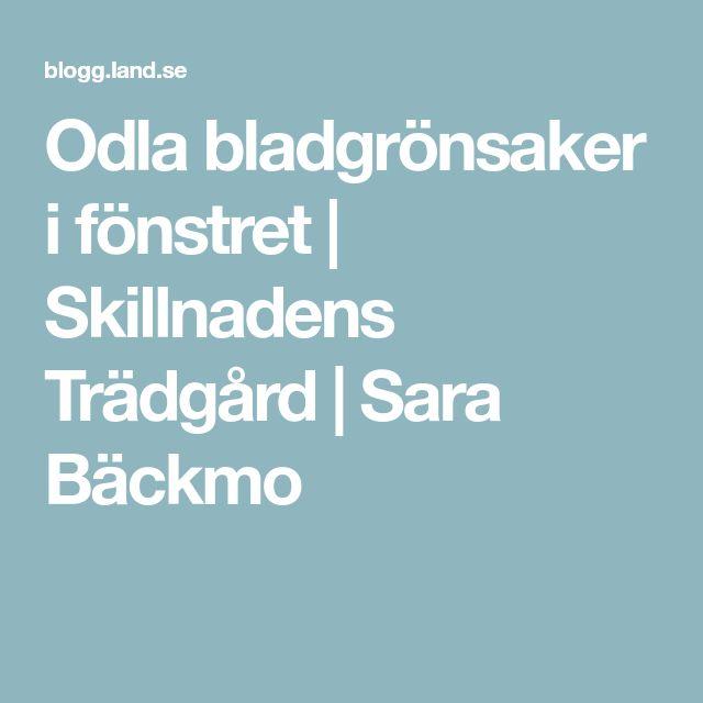 Odla bladgrönsaker i fönstret   Skillnadens Trädgård   Sara Bäckmo