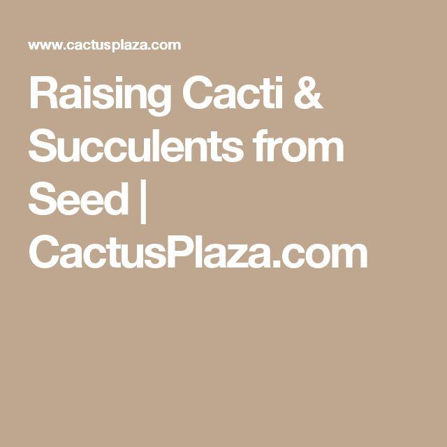 Raising Cacti & Succulents from Seed  | CactusPlaza.com