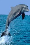 Dolphin Watch Eco-Cruise