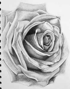 how to draw a realistic rose in pencil - Google Search