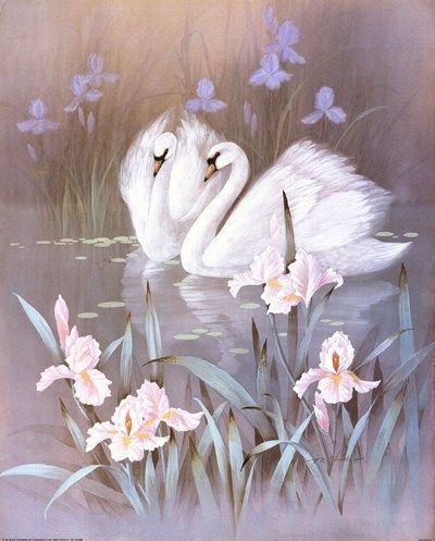 Swans With Waterlilies Art Print by T.C. Chiu