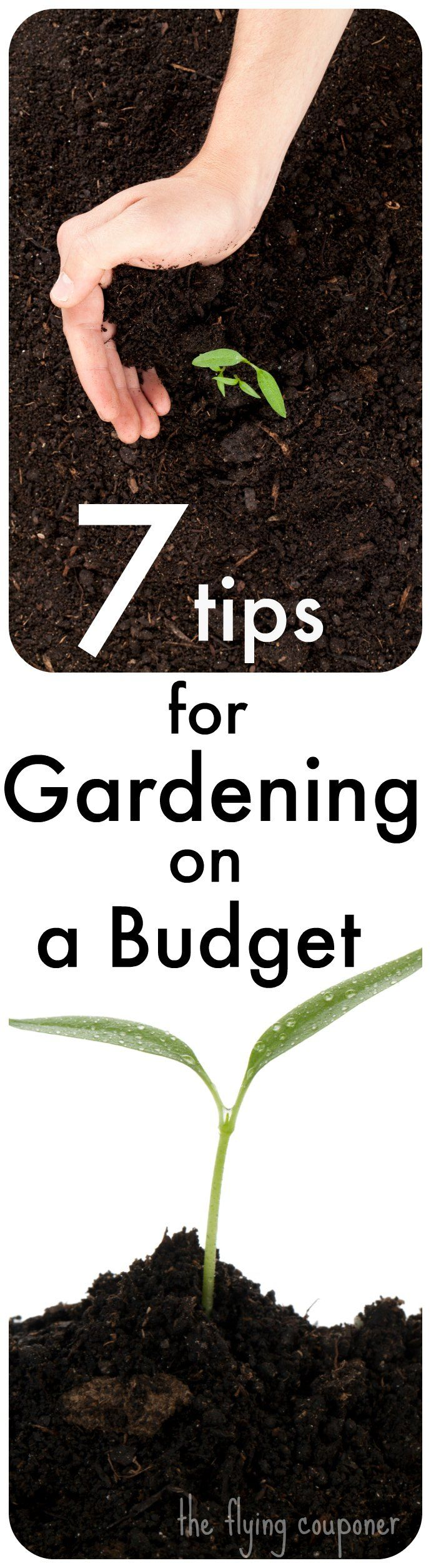 Check Out My 7 Tips For Gardening On A Budget Early