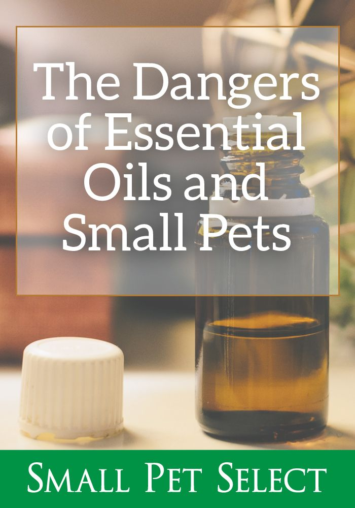 The Dangers Of Essential Oils For Rabbits Your 1 Source For