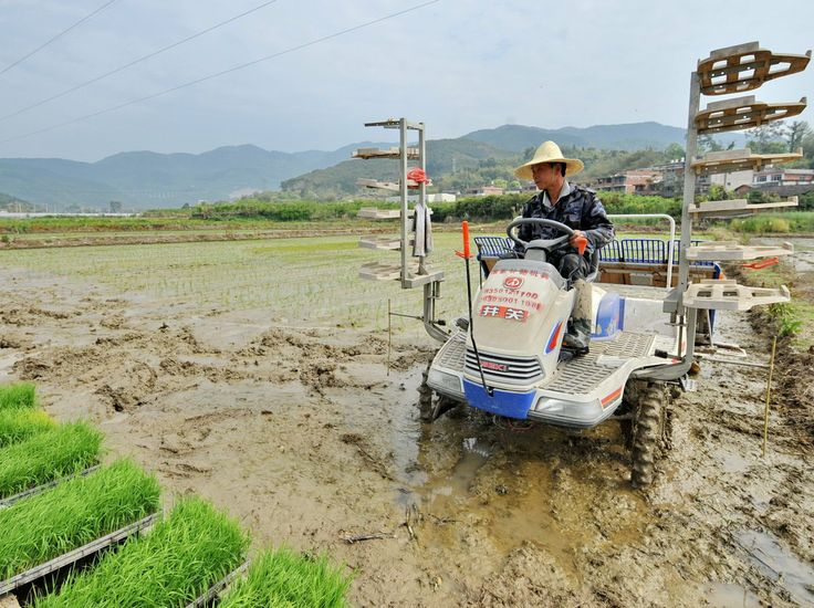 China Admits That One-Fifth Of Its Farmland Is Contaminated - don't buy imported Chinese food!!!!!Xiang Zhengming plants rice seedlings in a field in southeast China's Fujian Province earlier this month. A newly released report says nearl...