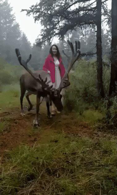 Video Beautiful deer with big horns