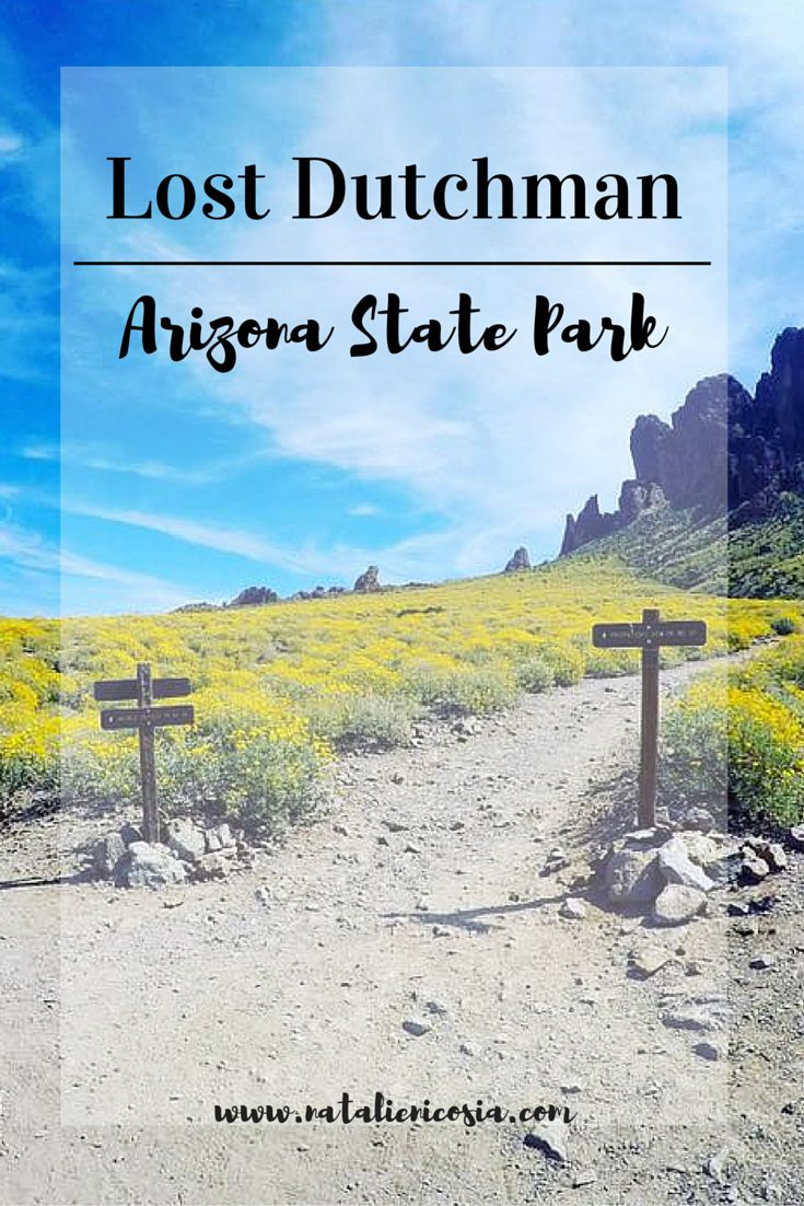 Lost Dutchman State Park| AZ Hike the Arizona Superstition Mountains, Treasure Loop Trail, Native Plant Trail, Prospector's View Trail, Jacob's Crosscut Trail, Siphon Draw Trail, Discovery Trail, Flatiron Trail. Best places to hike in Arizona in the spring time. Wander through the Wildflower Forest along Apache Trail. Arizona Hiking, Bucket list hiking. Phoenix hiking trail. Get lost for a while. Traveling to Arizona, things to do in Arizona. Arizona Adventure. Hiking Blog| Natalie Nicosia