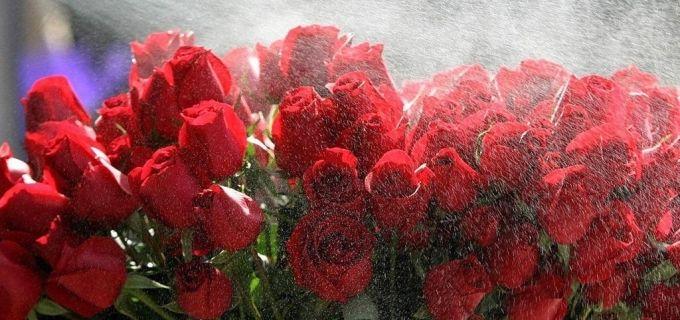 LOGiN Voucher | Deal - 36% off for Surprise Hand Bouquets from Dial A Bouquet