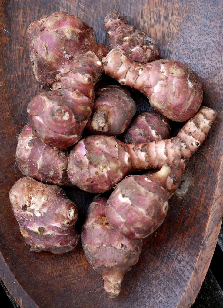 De aardpeer werd in 1603 door een ontdekkingsreiziger in een tuin van Noord Amerikaanse indianen ontdekt. In mijn kookstudio maken we er een zalige de heug strelende creme van. lekker bij de truffelaardappeltjes met gebakken tomaat. www.vergetengroenten.nl