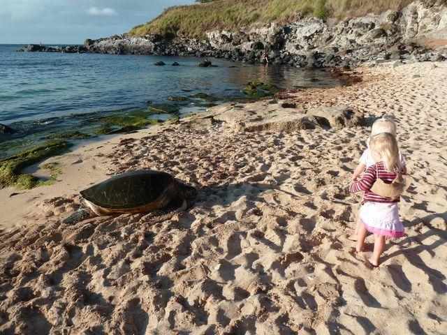 Hawaiv oyage 4 semaines famille en voyage