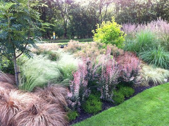 200 best images about gardening on pinterest gardens for Ornamental grass border design