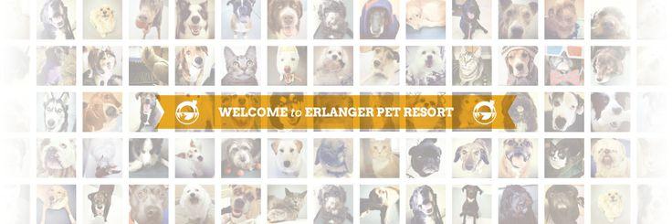 Erlanger Pet Resort & Day Spa