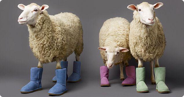 """UGG's zijn gemaakt van wol : De schapen worden netjes geschoren voor UGGs."""" Dit is makkelijk te weerleggen. UGG Australia (hét bekende merk – er zijn ook 'nep' varianten in de omloop) spreekt op haar website van sheepskin, oftewel schapenhuid. UGGs zijn dus niet op een of andere manier samengeperst uit wol verkregen door scheren, maar net als koeienleren schoenen gemaakt van de huid van dode dieren. De site leert mij tevens dat er gebruik wordt gemaakt van wol van Merino schapen, zoals het…"""