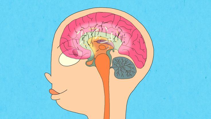 Wat gebeurt er in je hersenen tijdens de puberteit? (Schooltv)