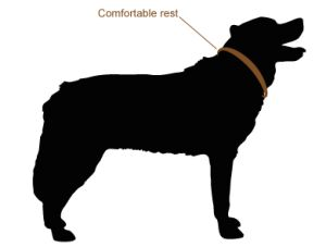 Ensure the dog collar is a comfortable fit for you dog by testing if you can easily slip two fingers between the neck and the collar