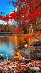Resultado de imagen para paisajes hermosos en bosques en otoño