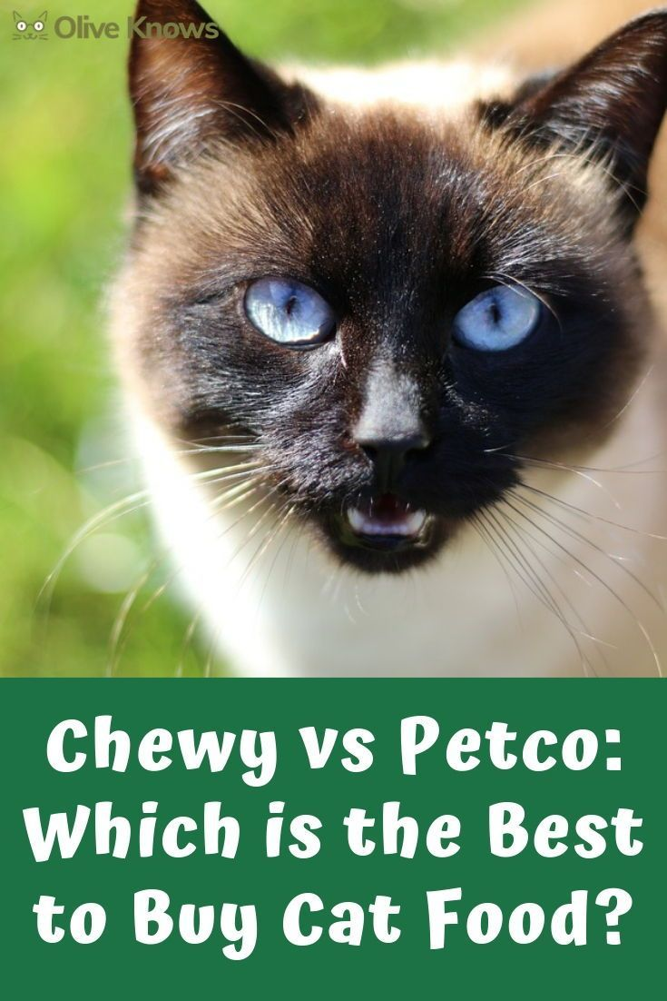 Chewy Vs Petco 2020 Which Is Best To Buy Cat Food Oliveknows Buy A Cat Petco Cat Food
