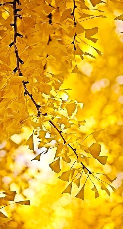 ♥ Golden Autumn