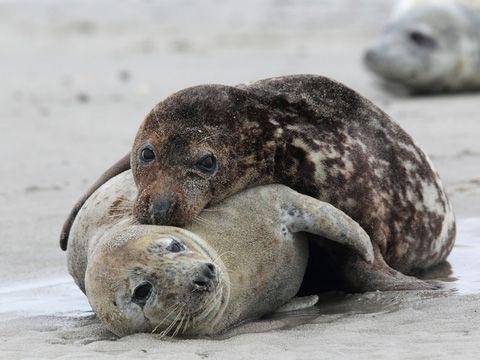 Die Seehundstation Norddeich – Familienerlebnis in Ostfriesland