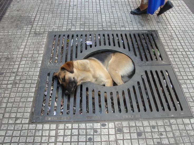 Santiago - street dog