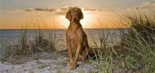 Bringfido.com- guides for pet friendly travel worldwide. Love this site!