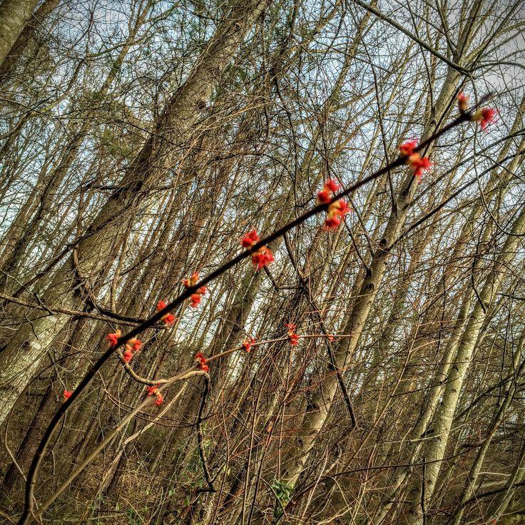 Haiku: Spring is here