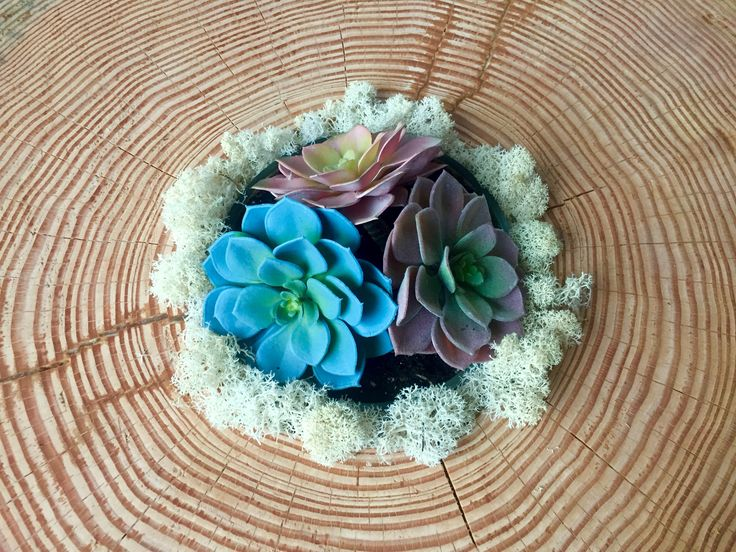 Sunken right in the middle of this stump table lives the sweetest succulent arrangement - the perfect solution to inquisitive children and clumsy friends.