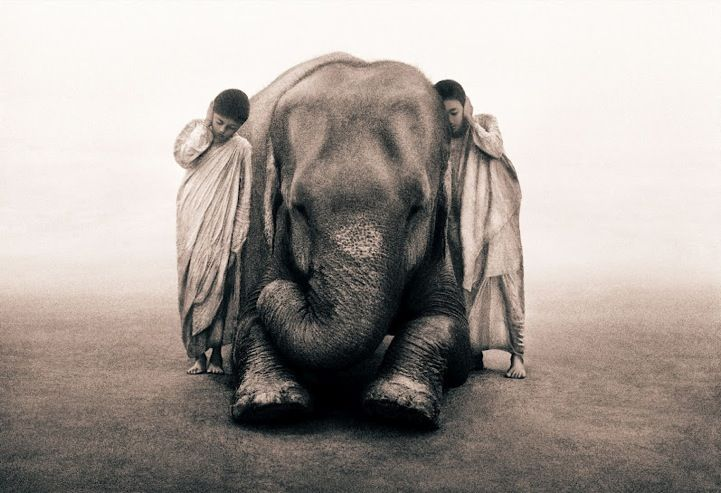 "Gregory Colbert's Ashes and Snow series. ""No longer shown as merely a member of the family of man, humans are seen as a member of the family of animals.""--No digital manipulation used to splice the subjects together. #elephant, #animal"