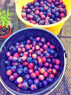 Recept: Zelf pruimenjam maken | Dit en nog veel meer op tuinblog De Boon in de Tuin -> http://deboon.blogspot.nl