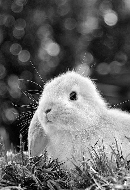 B = bunny