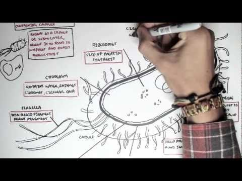92 best sci videos images on pinterest life science physical bacteria structure you tube 9 min drawing as he talks lots of cel info mod 2 fandeluxe Choice Image