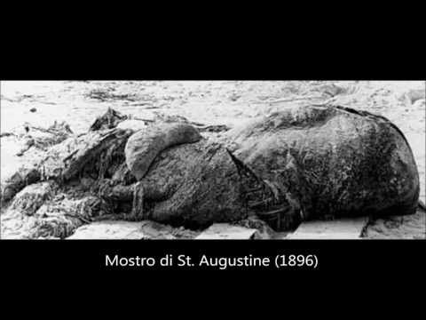 GLOBO OGGI – I Più Strani Ritrovamenti Animali del Nostro Pianeta dal 1896 ad oggi (VIDEO)