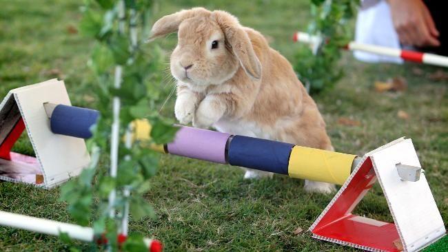rabbit jumping - Google Search