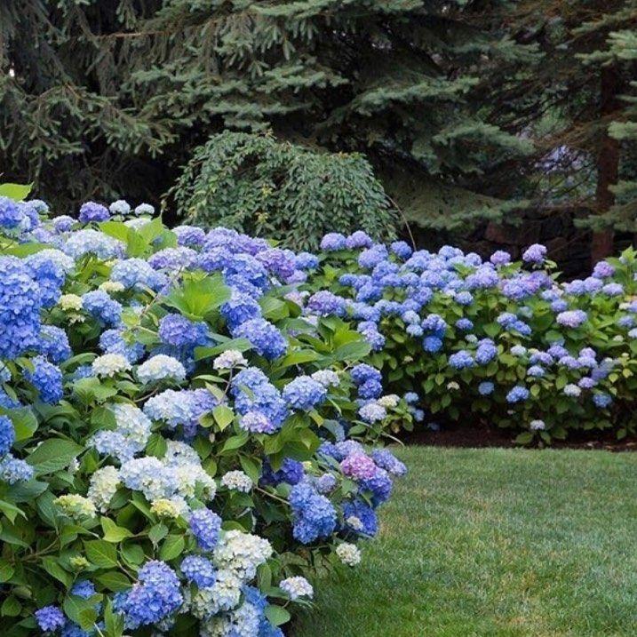 Garden Inspiration New Zealand On Instagram What Colour Hydrangeas Do You Like The Best To Target Blue Flower In 2020 Garden Edging Garden Styles Garden Inspiration
