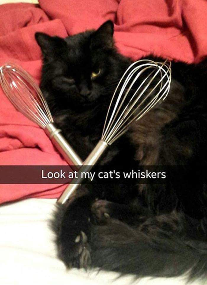 The cat's whiskers...Lol. Casey Lady humor.