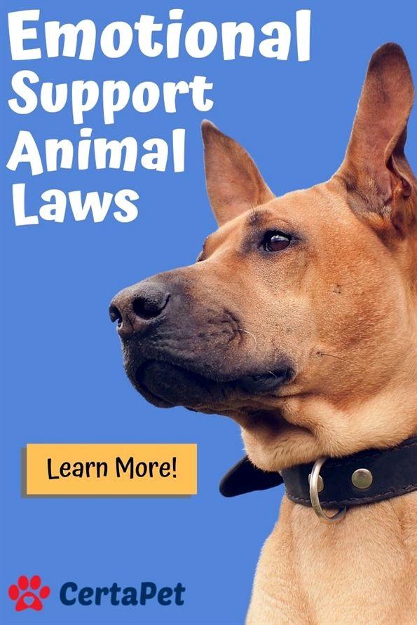 Dog Training Bumpers Dog Training Waco Dog Training 55110 Dog